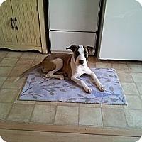 Adopt A Pet :: REESA - Torrance, CA