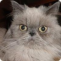 Adopt A Pet :: Suri - Phoenix, AZ