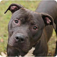 Adopt A Pet :: Timber - Chicago, IL