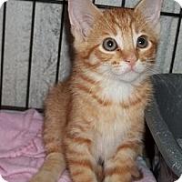 Adopt A Pet :: Bogart - Acme, PA