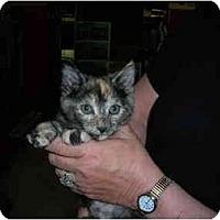 Adopt A Pet :: Jasmin - Riverside, RI