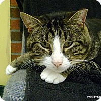 Adopt A Pet :: Trapper - Lancaster, MA