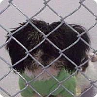 Adopt A Pet :: Berry - Muskegon, MI