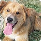 Adopt A Pet :: Bennett (Benny)