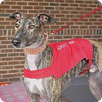 Adopt A Pet :: Toby - Lexington, SC