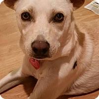 Adopt A Pet :: Lucero - Studio City, CA