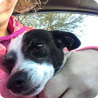 Adopt A Pet :: Stefie - Las Vegas, NV