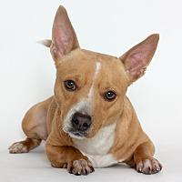 Adopt A Pet :: Rex - Stockton, CA
