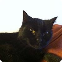 Adopt A Pet :: Amos-Zara - Laguna Woods, CA