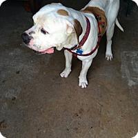 Adopt A Pet :: Phantom - Weatherford, TX