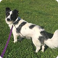 Adopt A Pet :: Tillie - New Oxford, PA