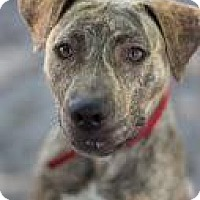 Adopt A Pet :: Gisele - Bradenton, FL