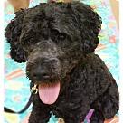 Adopt A Pet :: Scioto
