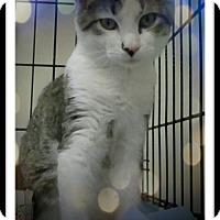 Adopt A Pet :: Tigger T. - Trevose, PA