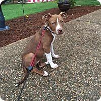 Adopt A Pet :: Dottie (ETAA) - Harrisonburg, VA