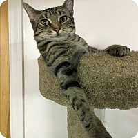 Adopt A Pet :: Dottie - Butner, NC