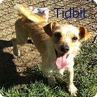 Adopt A Pet :: Tidbit - El Cajon, CA