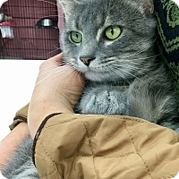 Adopt A Pet :: Chachi - Webster, MA