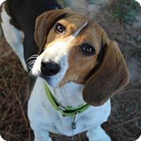 Adopt A Pet :: PORTER - Pennsville, NJ