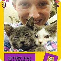 Adopt A Pet :: Zoey Blue - Overland Park, KS
