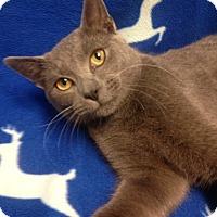 Adopt A Pet :: Link - Watauga, TX