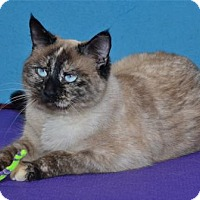 Adopt A Pet :: Reagan - Lenexa, KS