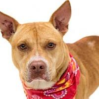 Adopt A Pet :: *POINTY - Orlando, FL