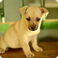 Adopt A Pet :: Gretel - San Antonio, TX