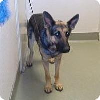 Adopt A Pet :: Kuvira - Wildomar, CA