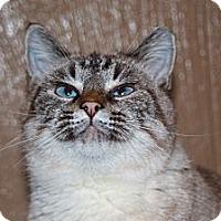 Adopt A Pet :: Crystal - Laingsburg, MI