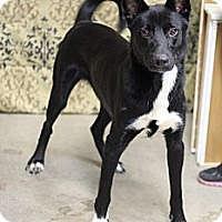 Adopt A Pet :: Wylie - Justin, TX