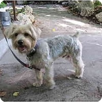 Adopt A Pet :: Elliott - Bunnell, FL