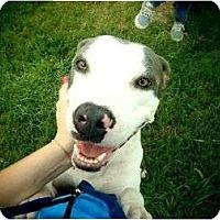 Adopt A Pet :: Ivey - Orlando, FL