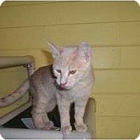 Adopt A Pet :: Vicky - McDonough, GA