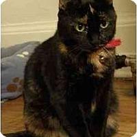 Adopt A Pet :: BeBe - Portland, OR