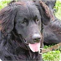 Adopt A Pet :: Marley - Rigaud, QC