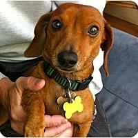 Adopt A Pet :: Wiggles - San Jose, CA