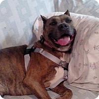 Adopt A Pet :: Zena - Villa Park, IL