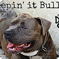Adopt A Pet :: Dozer - Orlando, FL