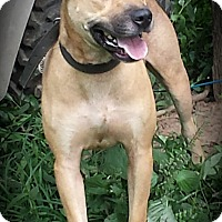 Adopt A Pet :: Tonka reduced adopt fee - Sussex, NJ