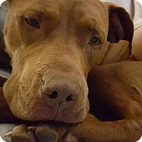 Adopt A Pet :: Penny - marine, MI