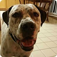 Adopt A Pet :: Capone - Lancaster, CA