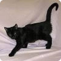Adopt A Pet :: Regina - Powell, OH