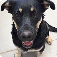 Adopt A Pet :: SUNDAE - Hurricane, UT