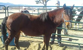 Mustang for adoption in Phelan, California - Sierra Mist
