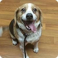 Adopt A Pet :: Lightning - Lisbon, OH