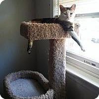 Adopt A Pet :: Cali - Medford, NJ