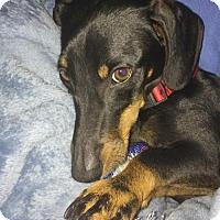 Adopt A Pet :: Lazaro Kipling - Houston, TX