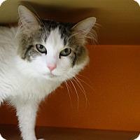 Adopt A Pet :: Snuffy - Elyria, OH