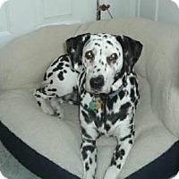 Adopt A Pet :: Dalmatian - Genoa City, WI